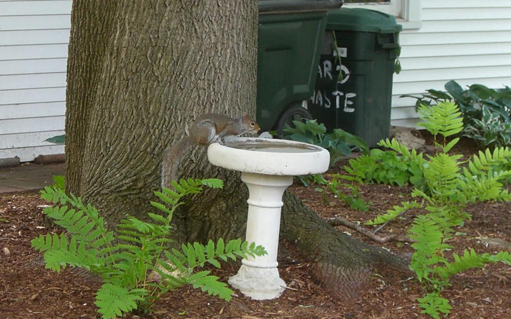 Eichhörnchen gibt es in Milwaukee reichlich.